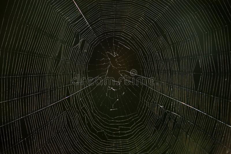 Download Spinneweb in dark stock foto. Afbeelding bestaande uit zijde - 275100