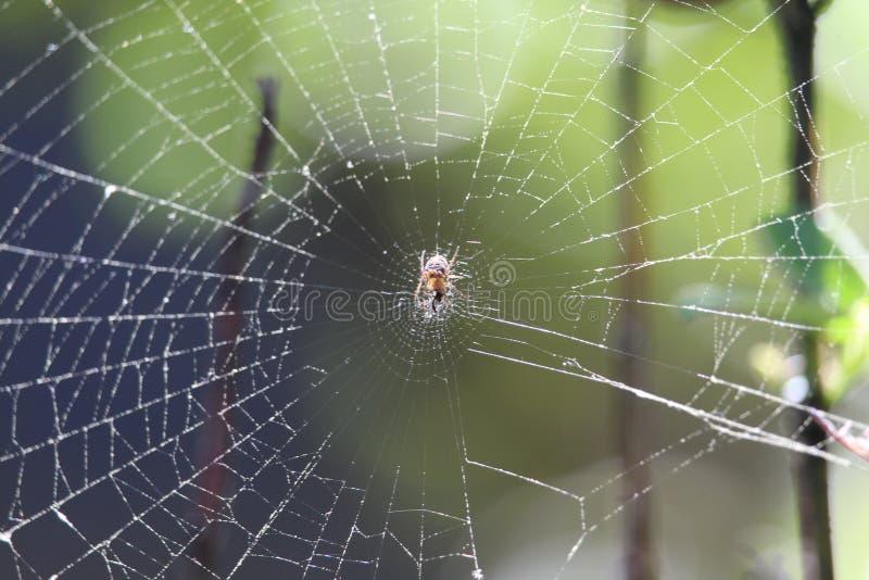 Spinneweb en de onduidelijk beeld groene achtergrond stock afbeeldingen