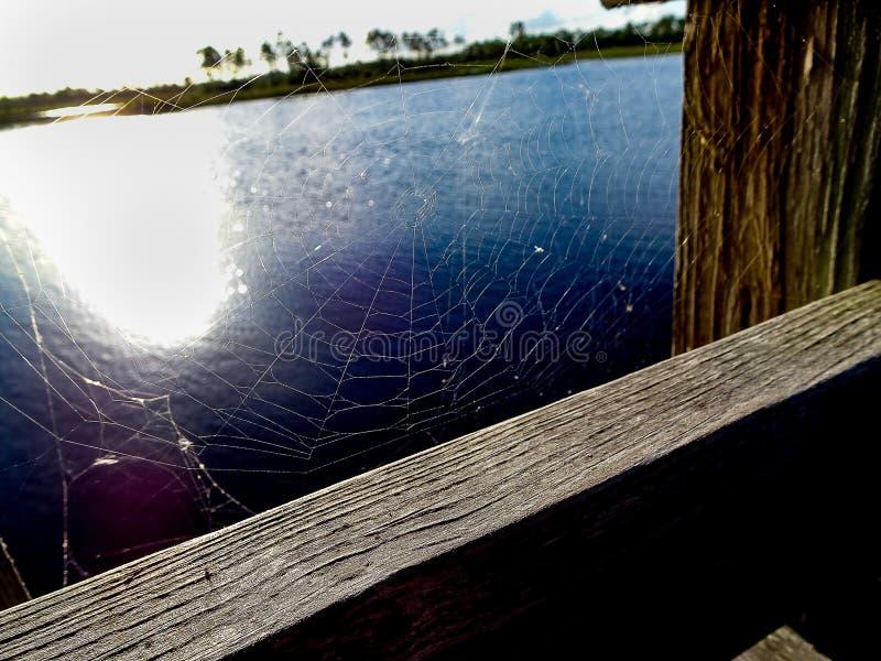spinneweb in everglades op een houten dok royalty-vrije stock foto