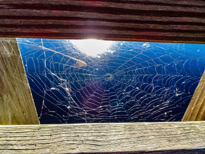 spinneweb in everglades op een houten dok royalty-vrije stock afbeelding