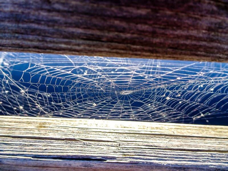 spinneweb in everglades op een houten dok royalty-vrije stock fotografie