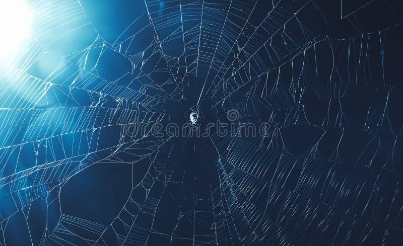 Download Spinneweb in koele toon stock foto. Afbeelding bestaande uit netwerk - 114227152