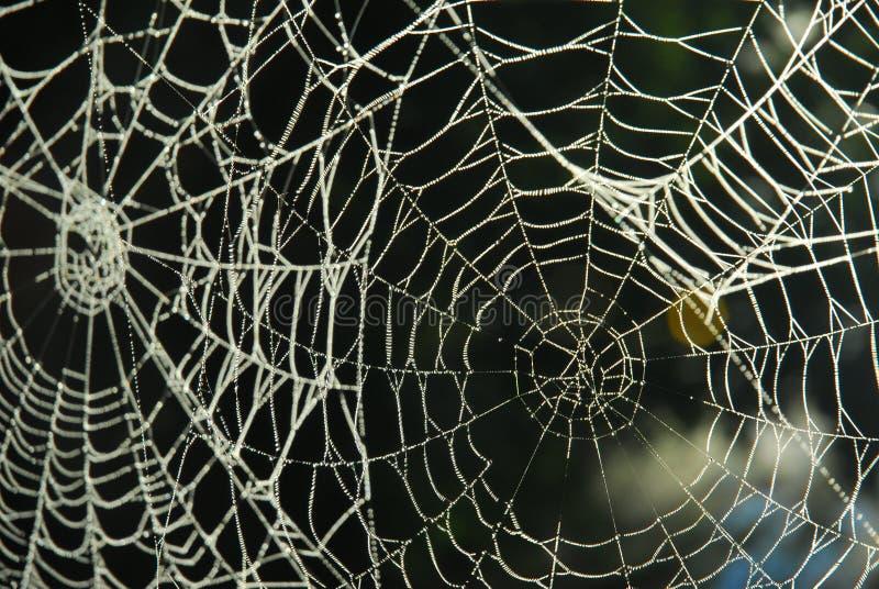 Spinneweb met dauw stock afbeeldingen