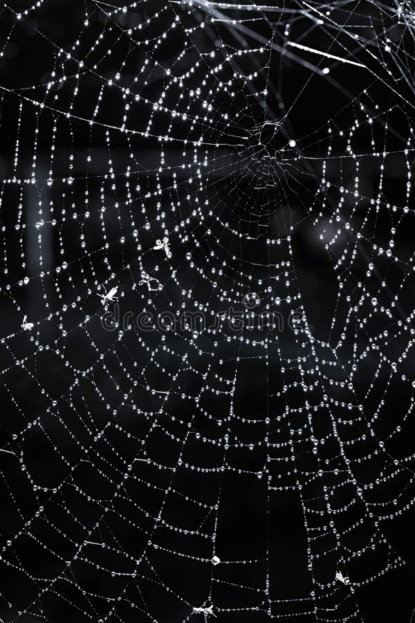 Spinneweb met dauw royalty-vrije stock afbeelding