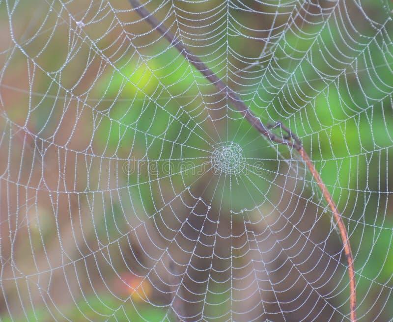 Spinneweb met Dauwdalingen stock afbeeldingen