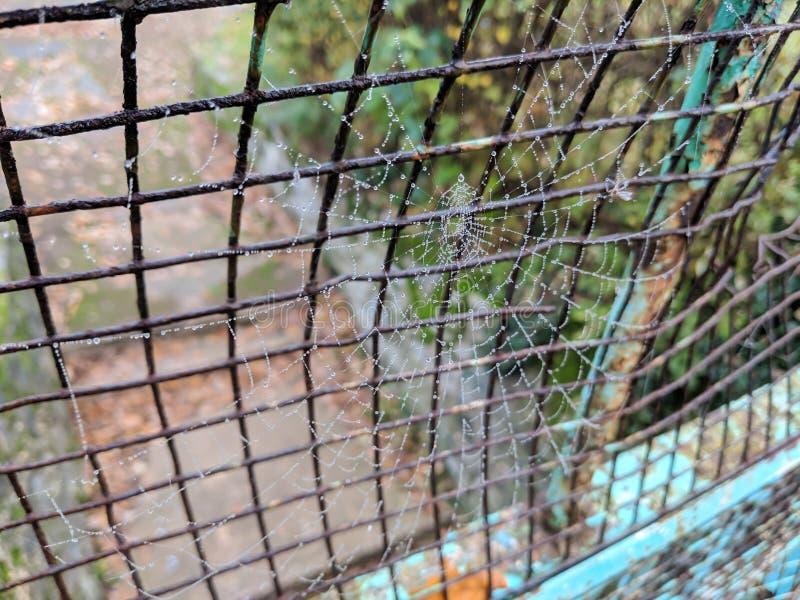 Spinneweb met dauwdalingen die van omheining overhandigen stock fotografie