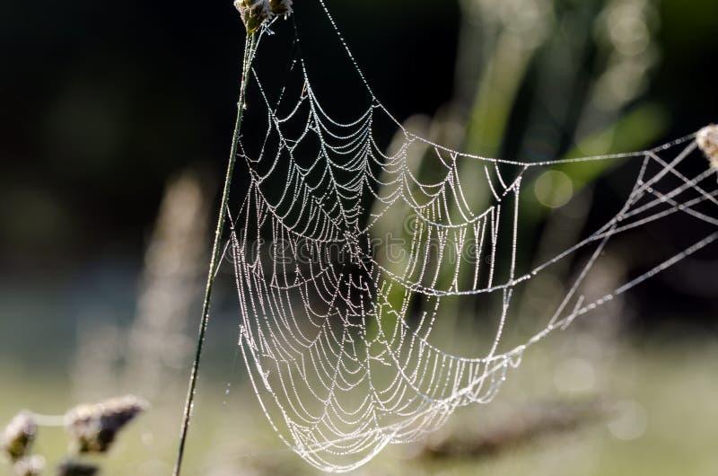 Spinneweb met de dalingen van het parelwater royalty-vrije stock foto