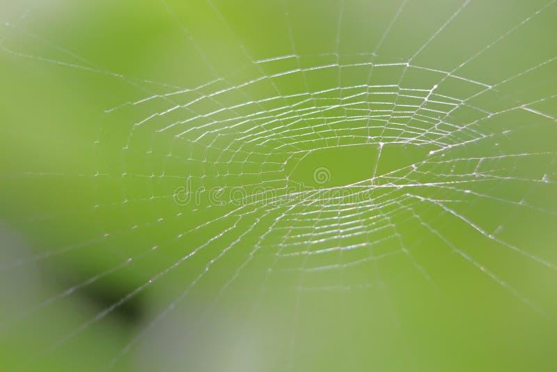 Spinneweb met groene achtergrond stock foto's