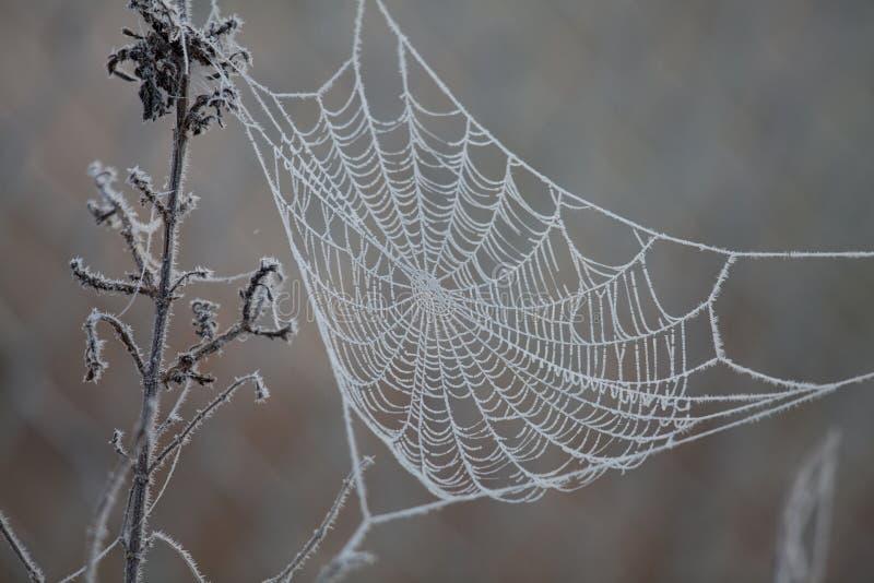Spinneweb met vorst stock afbeelding