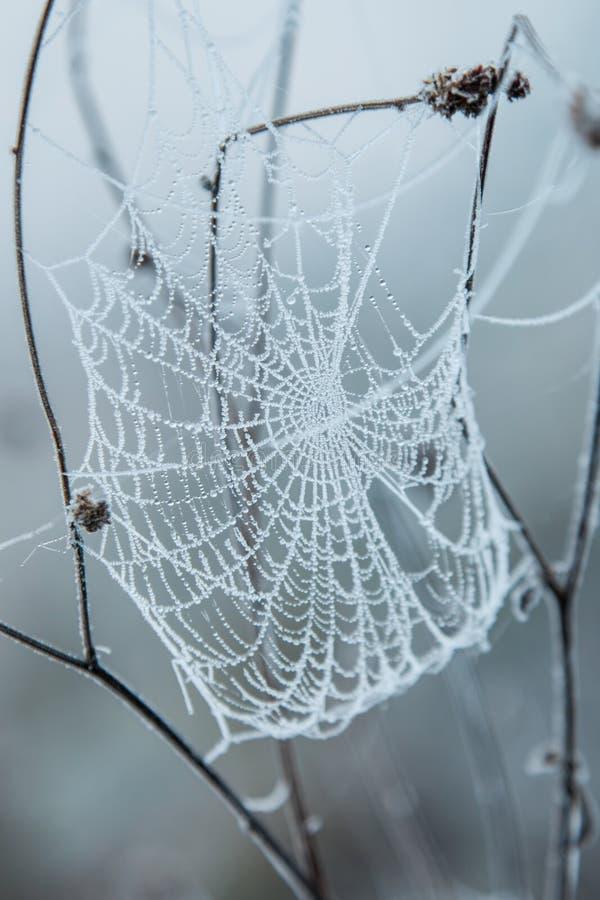 Spinneweb met vorst wordt behandeld die royalty-vrije stock afbeelding