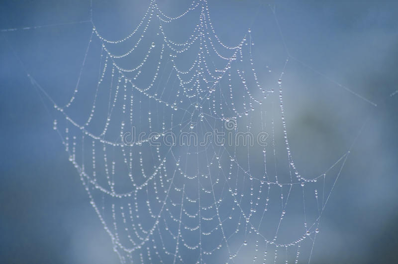 Spinnewebarchitectuur stock afbeelding