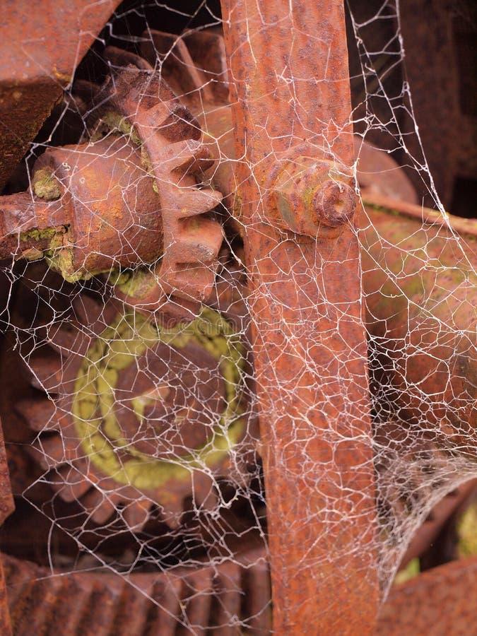 Spinnewebben royalty-vrije stock foto's