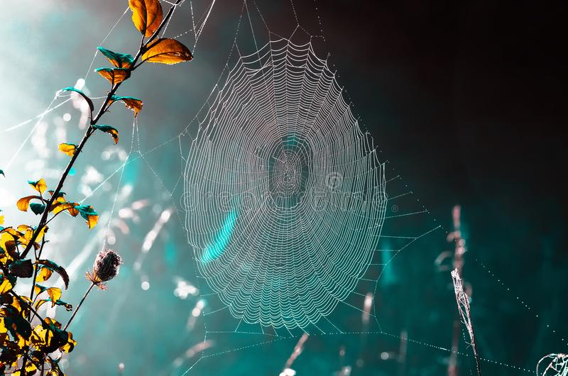 Spinnewebben op droog gras bij mistige de herfstochtend royalty-vrije stock foto