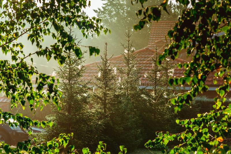 Spinnewebben op pijnbomen dichtbij huizen royalty-vrije stock foto