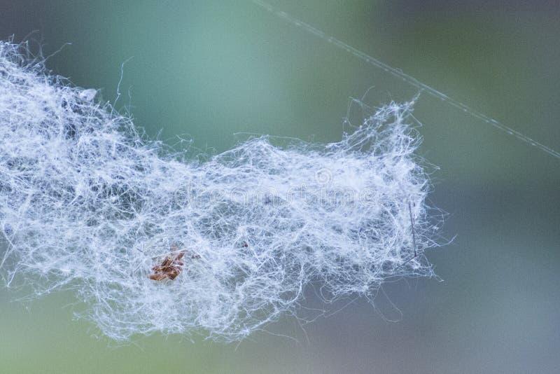 Spinnewebben, watten, de lentestuifmeel, vliegende watten royalty-vrije stock afbeeldingen
