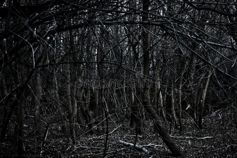Spinney - silhouettes in dark forest area with copyspace on foreground royalty free stock image