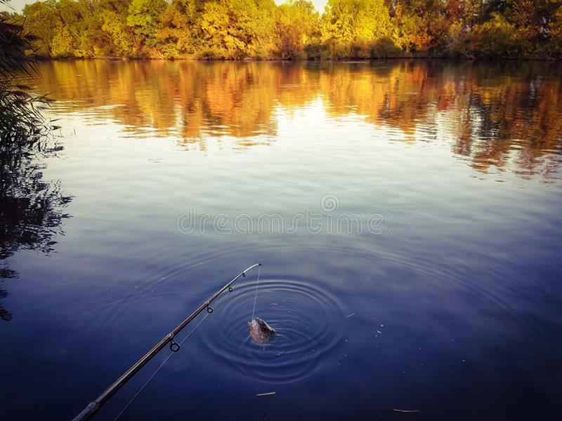 Fishing spinning on the river royalty free stock images