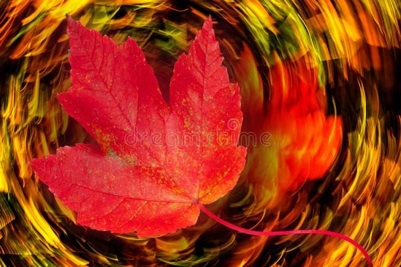 Spinning Leaf Dream royalty free stock image