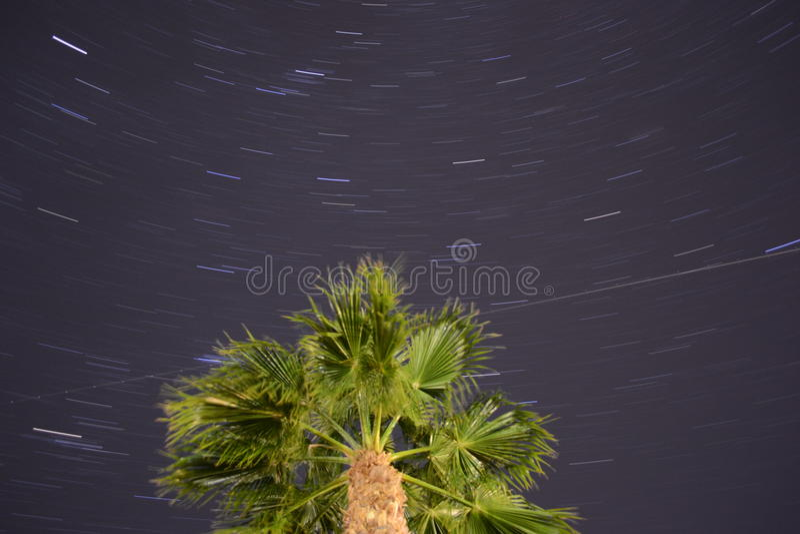 Spinning night around Palm tree royalty free stock images