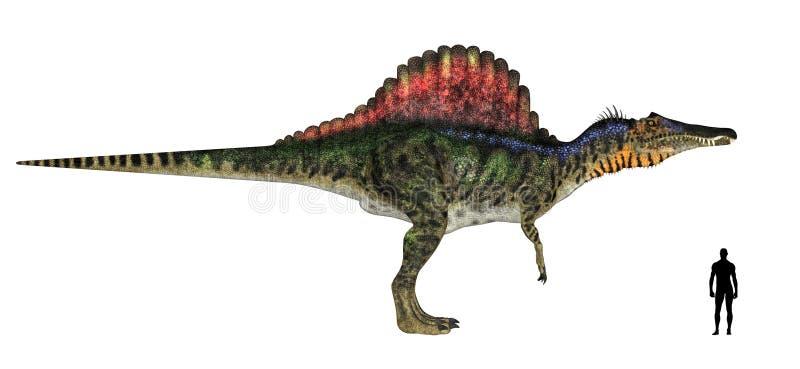 Spinosaurus Size Comparison Royalty Free Stock Photos