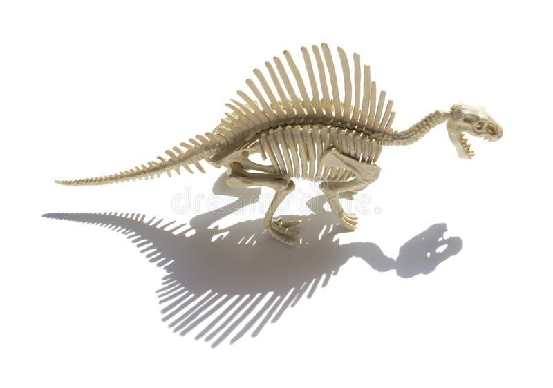 Spinosaurus skelett med skugga på vit bakgrund arkivfoto
