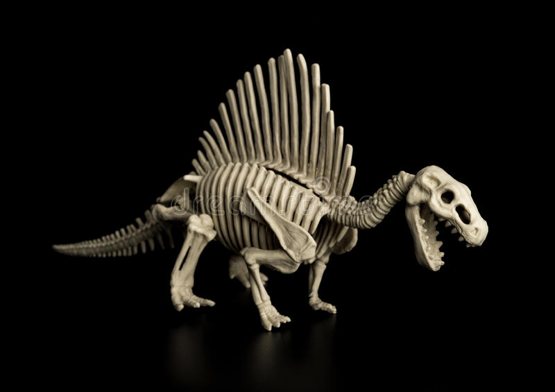 Spinosaurus skelett på svart royaltyfria foton