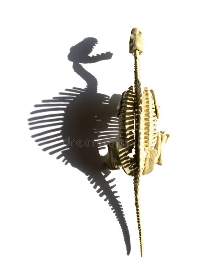 Spinosaurusskelett för bästa sikt med skugga på vit bakgrund royaltyfri foto