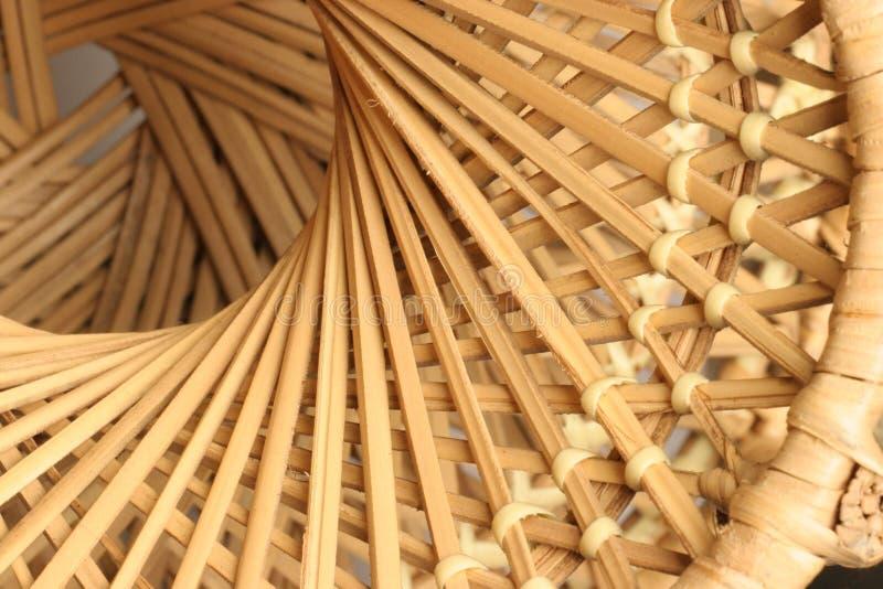 spinowy wikliny zdjęcia stock