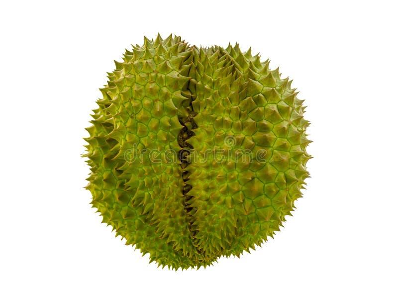 Spiny świeży durian, wielka lobed owoc, silnie wącha rośliny na biały odosobnionym zdjęcie stock