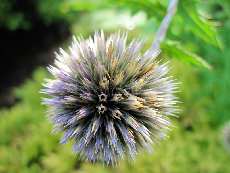 Spiny day stock image