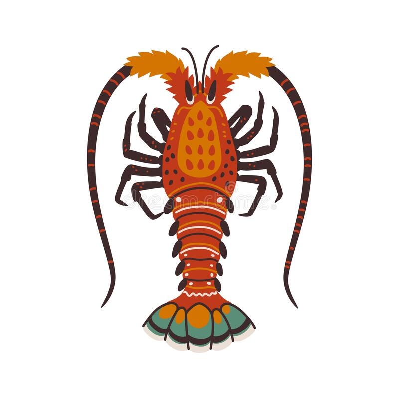 Spiny lobster, langouste or lobster or with long antennae and without claws. Simple Colorful vector illustration in flat cartoon style vector illustration