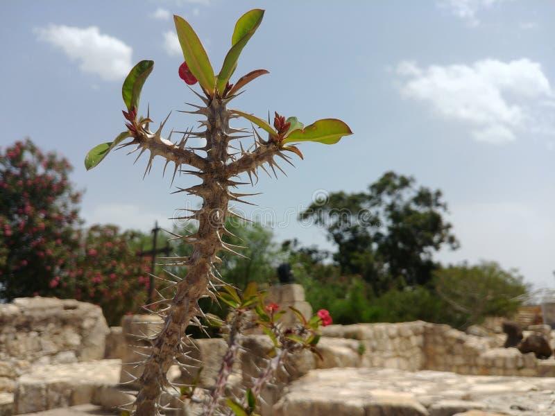 Spiny roślina zdjęcia stock