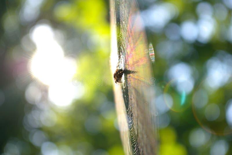 Spinzitting op een spinneweb in het bos royalty-vrije stock foto's
