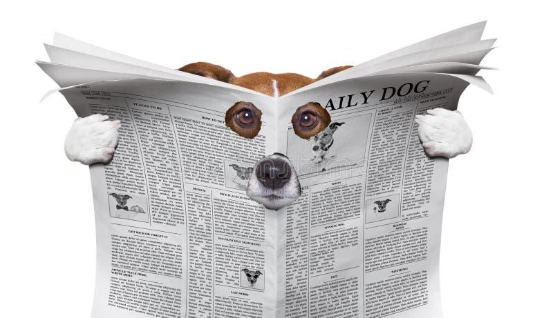 Spionhond die een krant lezen stock afbeeldingen