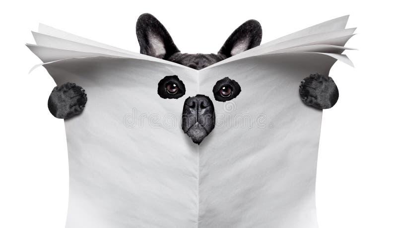 Spionhund som läser en tidning royaltyfria bilder
