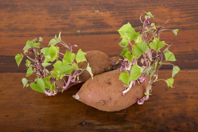 Spira för potatisar royaltyfria foton