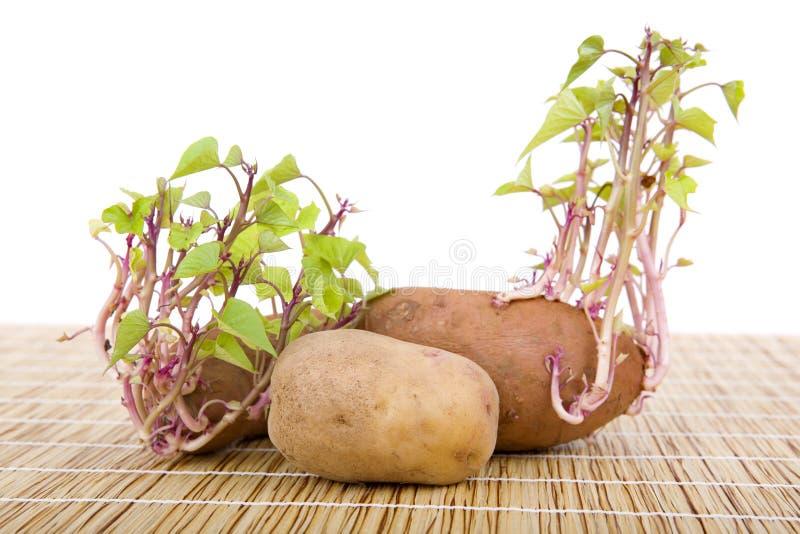 Spira för potatisar arkivbilder