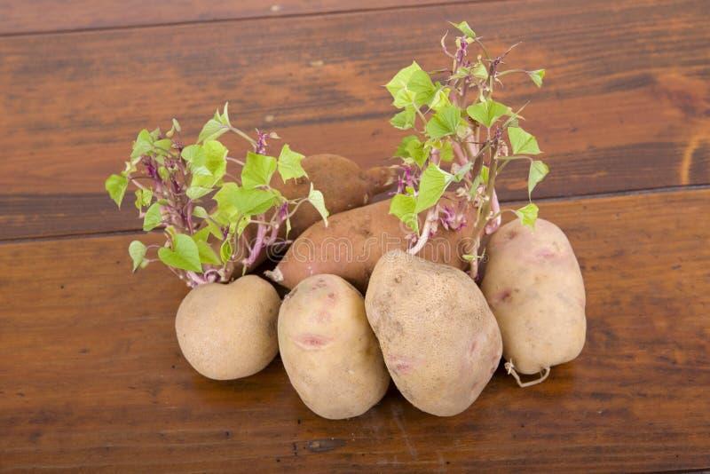 Spira för potatisar arkivfoton
