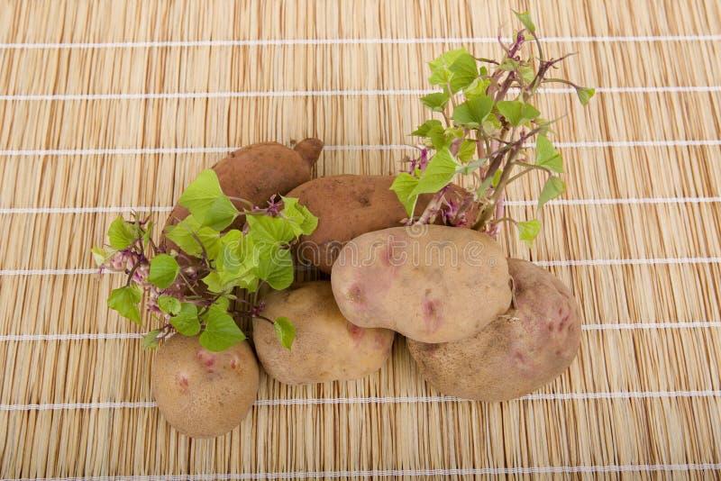 Spira för potatisar royaltyfri fotografi
