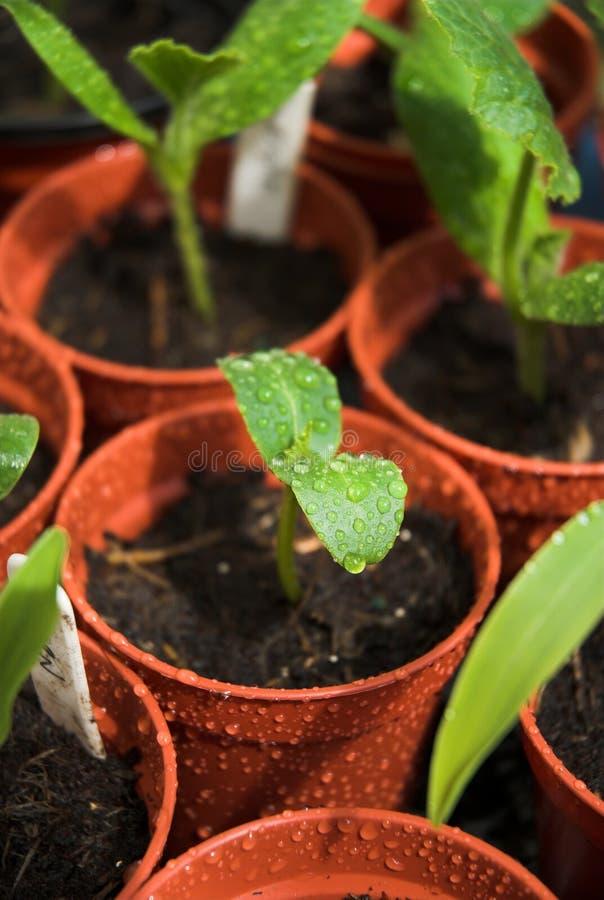 spira växter royaltyfria foton