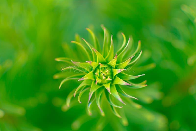 Spiraal van de Hipnotic de abstracte groene installatie, over een vage achtergrond royalty-vrije stock foto