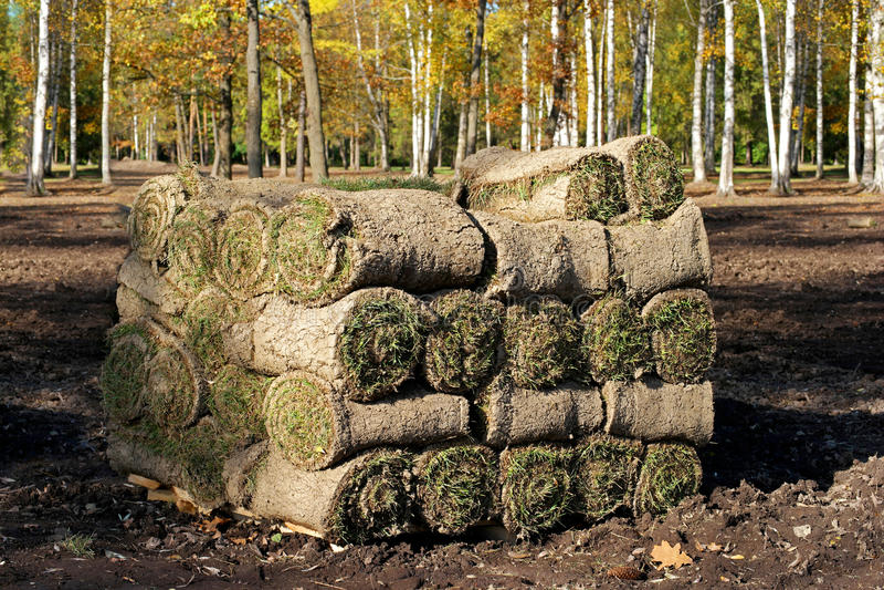 Spiraal van vers gerold grasgras stock foto