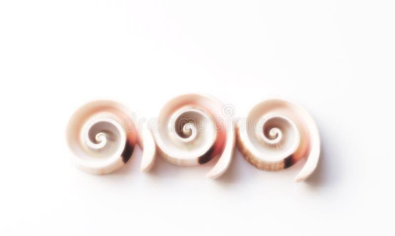 Spiraalvormige shells royalty-vrije stock foto