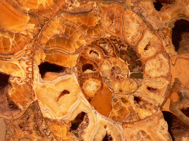 Download Spiral stock photo. Image of extinction, polished, ochre - 8672376