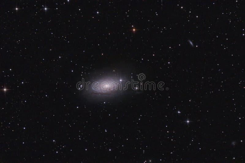 spiral för galax m63 royaltyfri foto