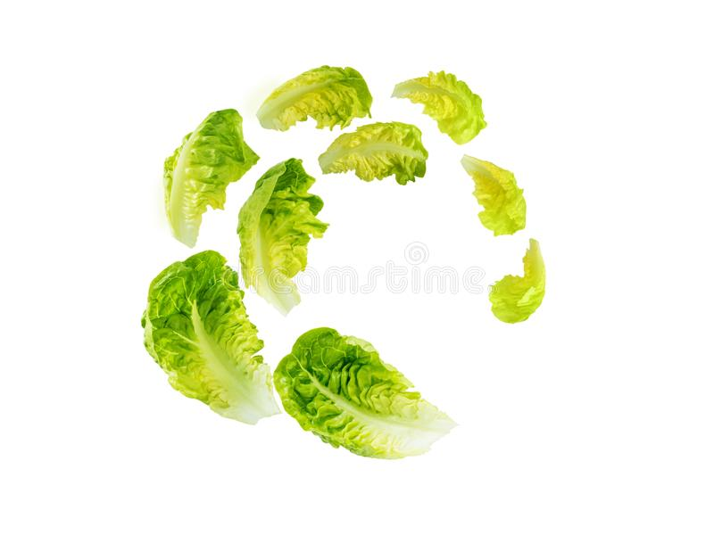 Spiral flying heap of green baby cos lettuce salad leaves royalty free stock photography