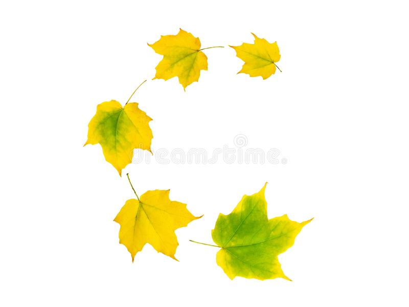Spiral flying heap of yellow green maple tree autumn leaves royalty free stock photo
