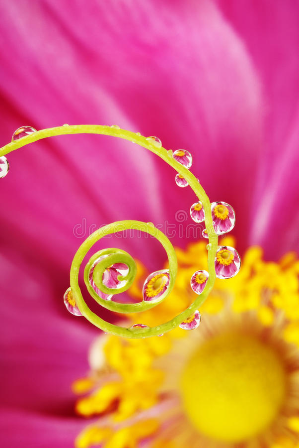 Spiral and rain drops stock photography
