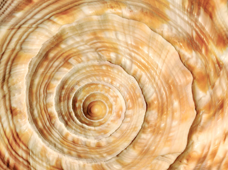 Spiral on sea shell royalty free stock image