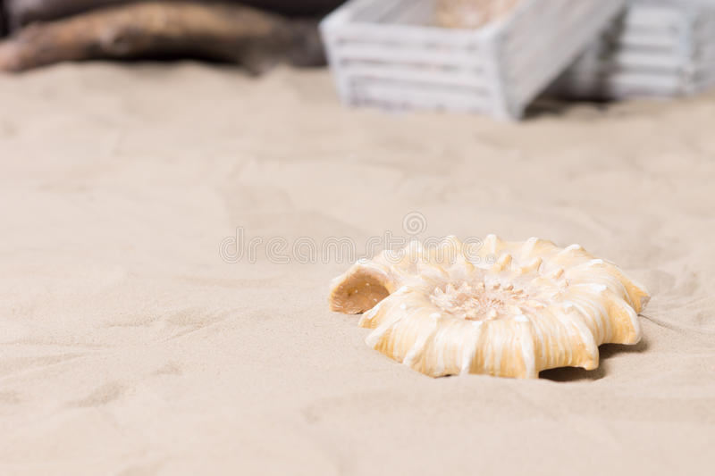 Spiral sea shell lying on beach sand royalty free stock photography